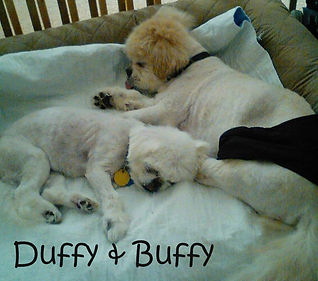 Duffy and Buffy.jpg