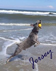 jersey beach 1.jpg