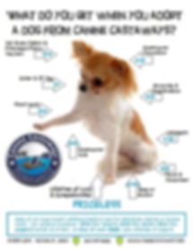 ADOPT what you get chi 2.jpg