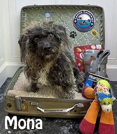 Mona 061321 suitcase.jpg