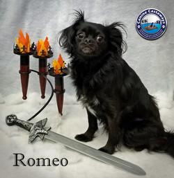 Romeo 0407 snow