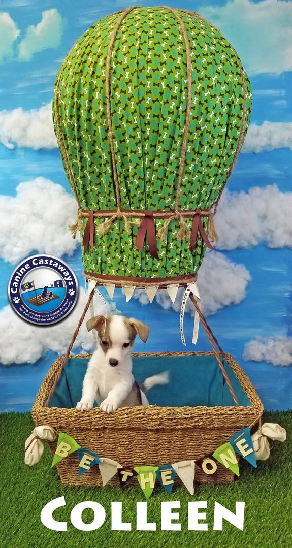 pups Colleen 032920 balloon.jpg