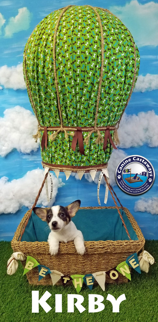 pups Kirby 032920 Balloon.jpg