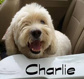 Charlie VW bug.jpg