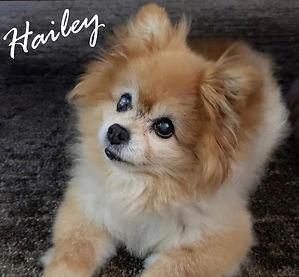 Hailey.jpg