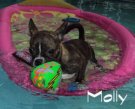 Molly Boston Swimming.jpg