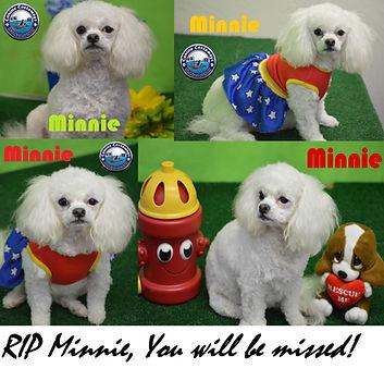 rip Minnie Tribute.jpg