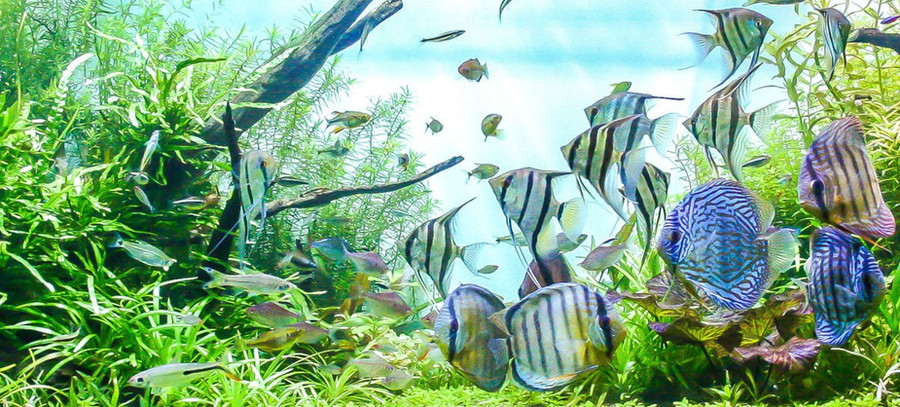 Fische 1.jpg