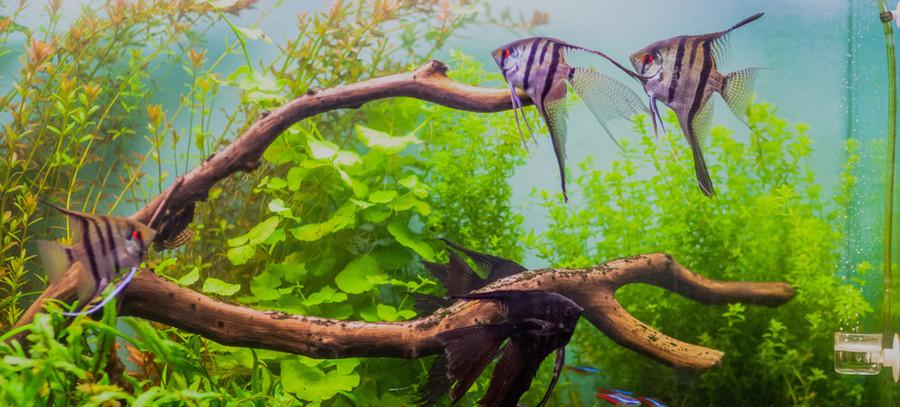 Aquarium  2.jpeg