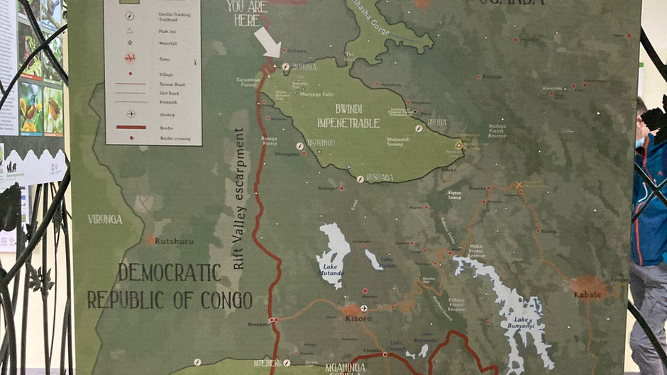 Going gorilla trekking
