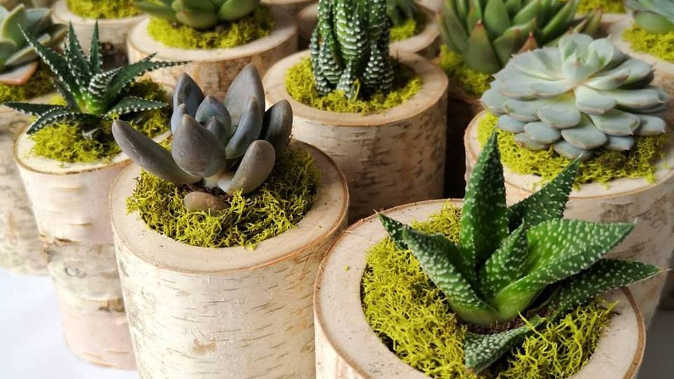 Birch Planter Party Favours