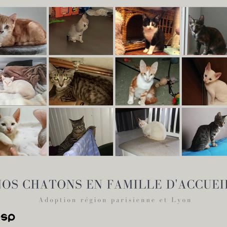 Nos chatons en famille d'accueil