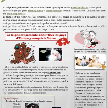 IDEE RECUE N°5 - LA TEIGNE EST UNE MALADIE DES CHATS DU SUD
