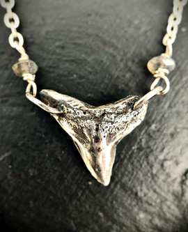 Sandbar Shark Tooth Necklace