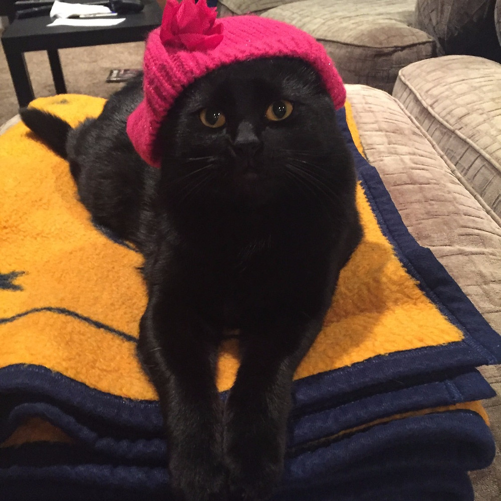 Happy Holidays, from my cat in a lil hat.