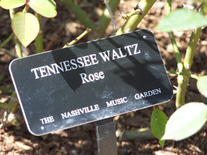 tn-rose-sign-lg.jpg