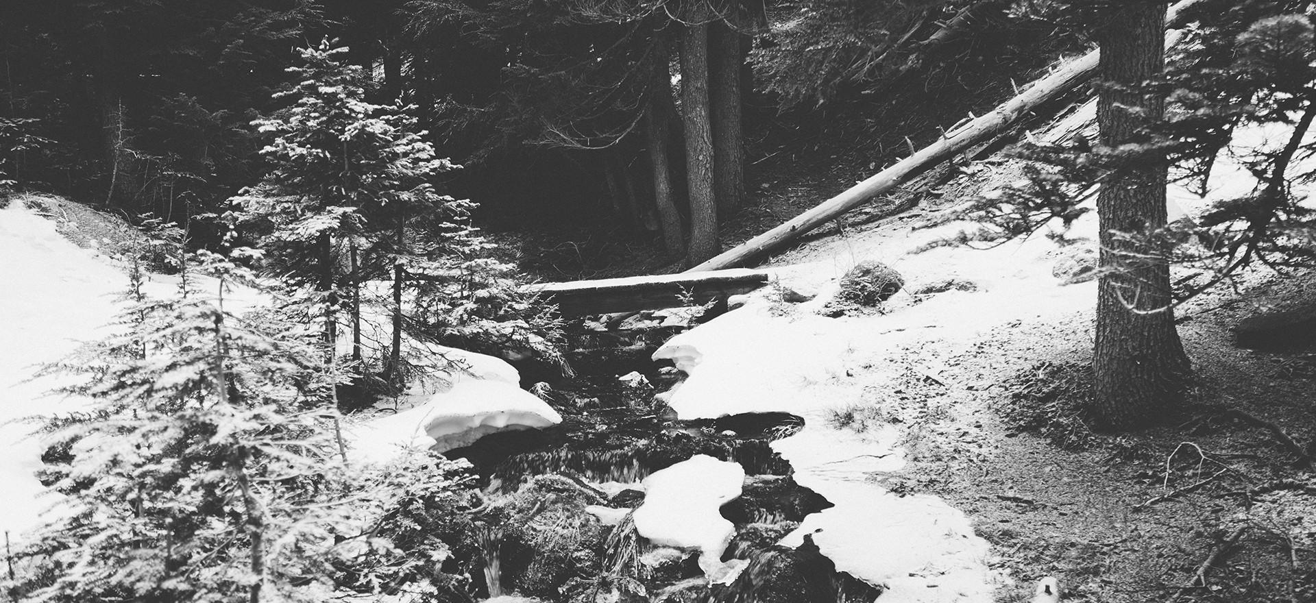 """""""Au milieu de l'hiver, j'ai découvert en moi un invincible été"""" Albert Camus"""