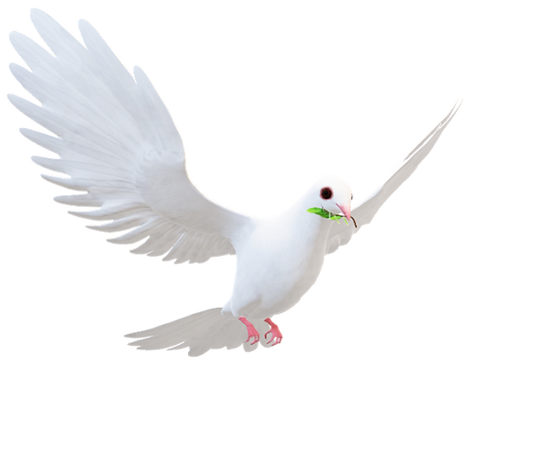 DOVE FACING RIGHT.png