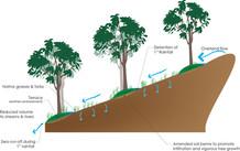 BMP_Terraced Reforestation.jpg