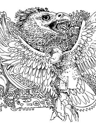 adler vogel ausmalbild ausmalen gratis k
