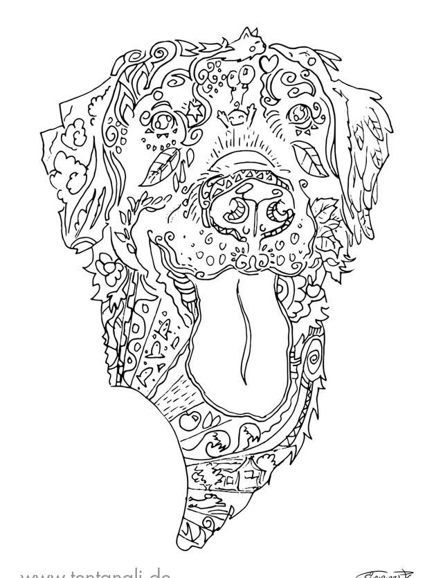 labrador hund ausmalbild ausmalen erwach