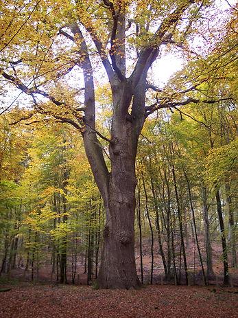Forêt Compiègne LAB'VENTURE