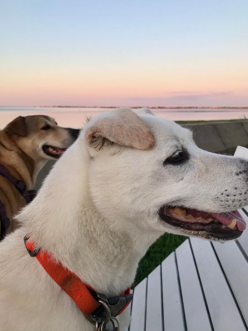 Christine's dogs