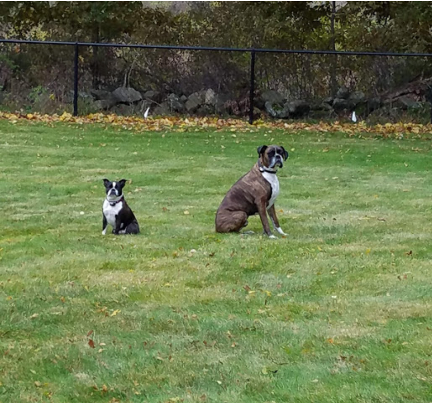 Tim's dogs