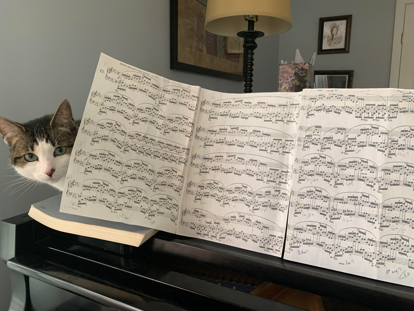 Pixie's Cat behind the music sheet