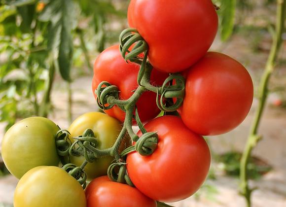 Tomate de Cacho . 1 kg