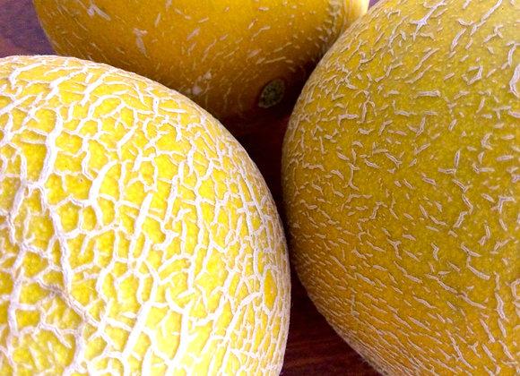 Meloa do Algarve . 1 unid