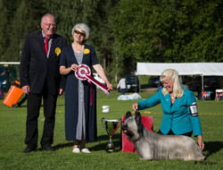 Best in Show at CACIB Tervakoski (FIN)moe.jpg