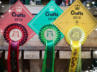 Crufts 2019 & Turku IDS