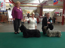 CH Finnsky Mustang CAC, CACIB & BOB today at Mouscron Int show..jpg