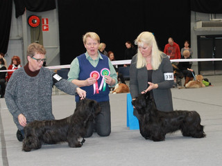Lahti puppy show 31.1.2015