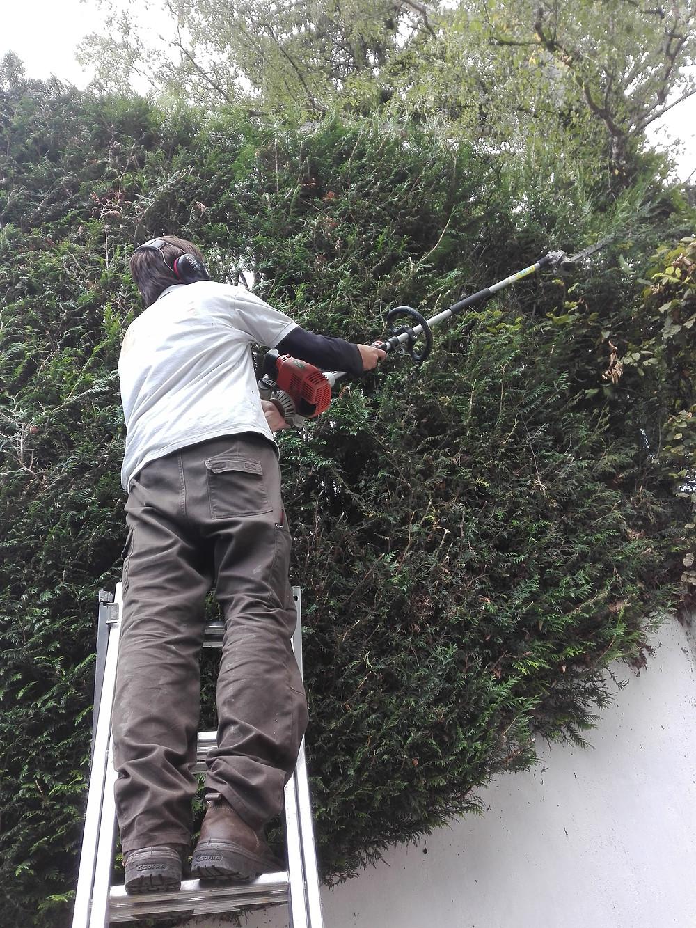 Jardinier Saint Cloud