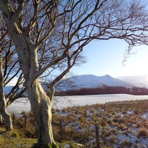 Snowy day at Killechronan
