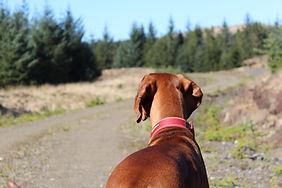 Amber on a Walk