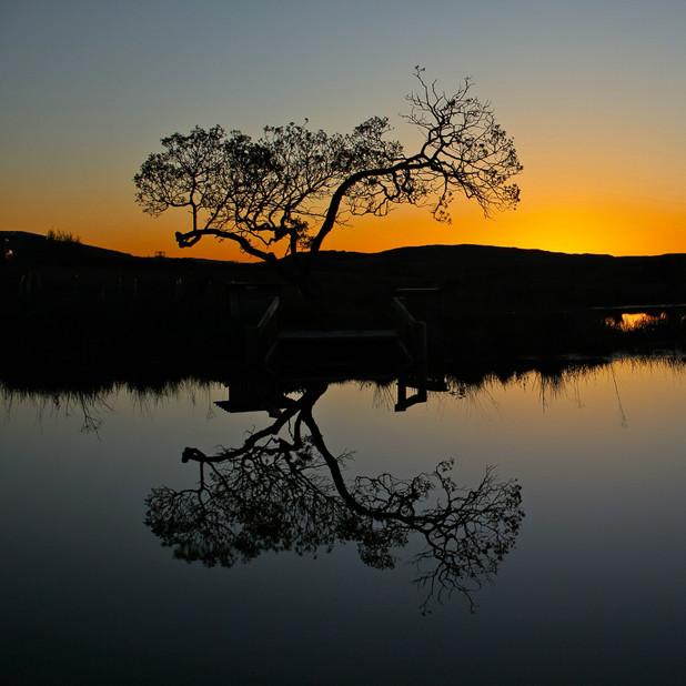 Willow tree on Crannich pond
