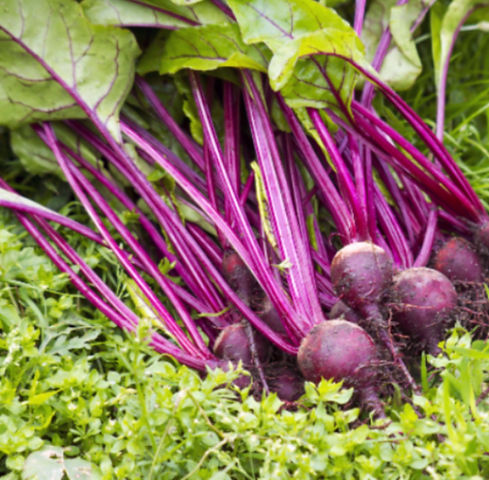 beets cropped image.jpg