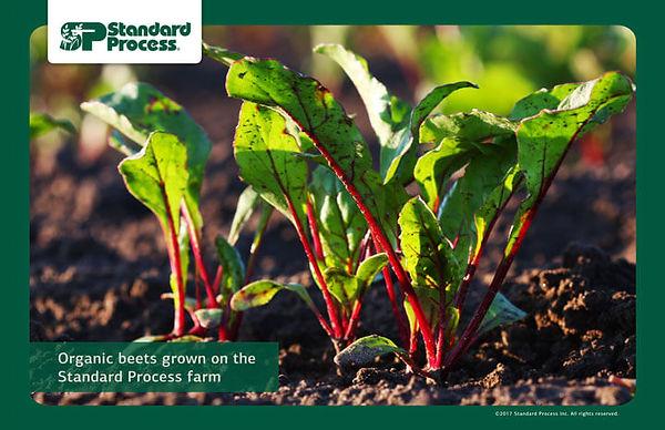 Standard Process Beets farm-photo-720px-