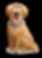 new transpar dog 1.png