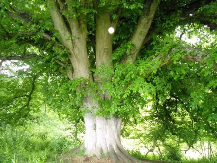 claire karen aamichael tree .jpg
