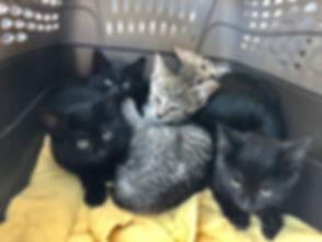 Various Kittens 0620.jpg