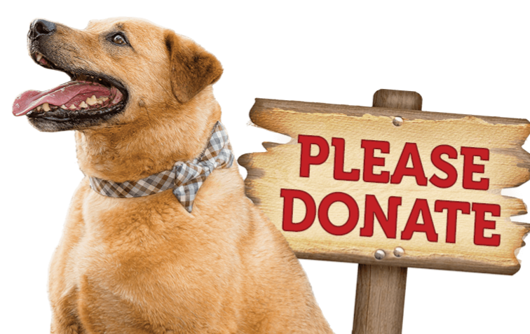 Donate Yellow lab_edited_edited.png