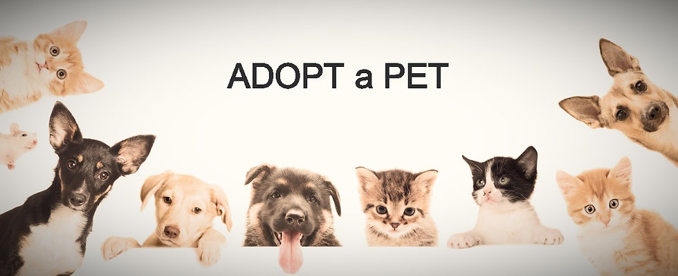 Many dogs and cats for PARS website_edited.jpg