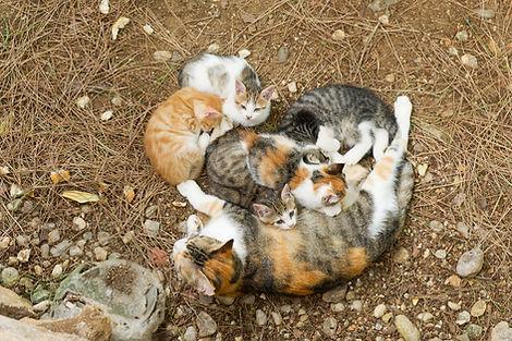 Stray Mom and kittens.jpg