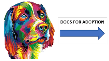 Colourful dog for website.png