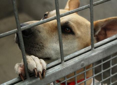 Shelter dog pic.jpg
