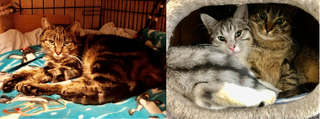 Bella & her kittens Nikita + Timothy